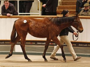 Lot 761: Sea The Stars (IRE) / Our Queen of Kings (GB)