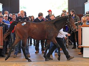 Lot 1427: Cacique (IRE) / Bantu (GB)
