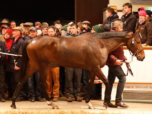 Just The Judge Selling for 4.5m Guineas