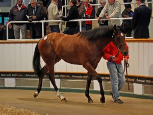 Lot 44: High Chaparral (IRE) / Abunai (GB)