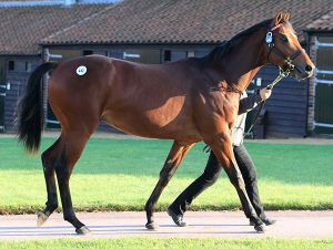 Lot 442: Galileo (IRE) / Penang Pearl (FR)