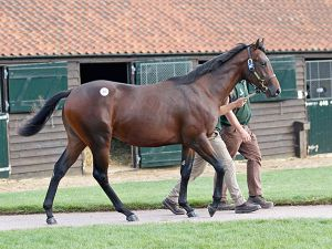 Lot 97: Oasis Dream (GB) / Titivation (GB)