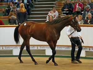 Lot 30: Galileo (IRE) / A Z Warrior (USA)