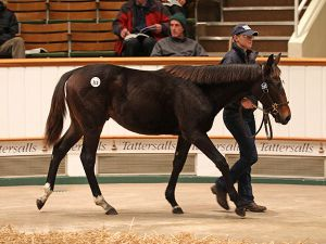 Lot 313: Swiss Spirit (GB) / Laminka (GB)