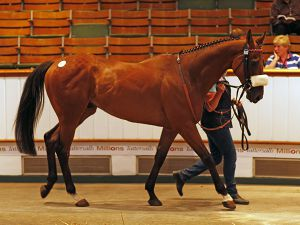 Lot 552: American Hope (USA)