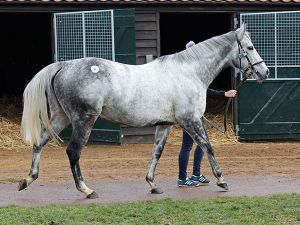 Lot 64: Sutton Veny (IRE)