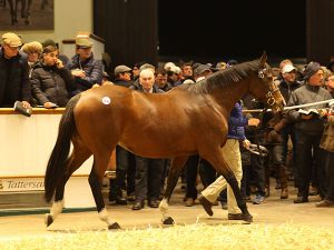 Lot 1541: The Miniver Rose (IRE)