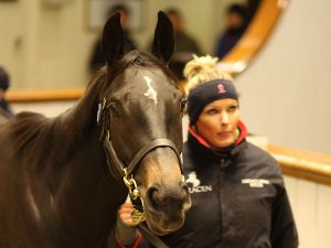 Last year's winner Chartreuse selling for 825,000 gns at the Tattersalls December Mare Sale