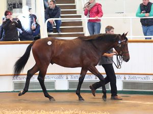 Lot 229: Dubawi (IRE) / Nature Spirits (FR)