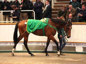 Lot 47: Invincible Spirit (IRE) / Loch Jipp (USA)