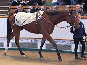 Lot 639: Cloudberry (GB)