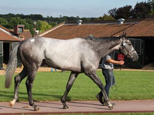 Lot 781A: Fanciful Angel (IRE)