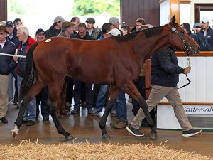 Lot 1063: Sea The Stars (IRE) / Biz Bar (GB)