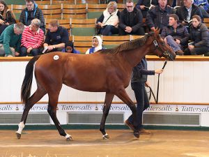 Lot 418: Gloam (IRE) B.F. by Galileo (IRE) x Dank (GB)