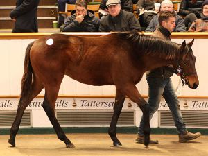 Lot 646: Kodiac (GB) / Gold Again (USA)