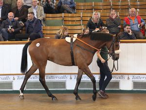 Lot 189: Tamayuz (GB) / Ziria (IRE)