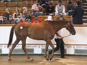 Lot 221: Award Winning (IRE)