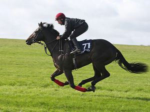 Lot 71: Scat Daddy (USA) / Alegendinmyownmind (GB)