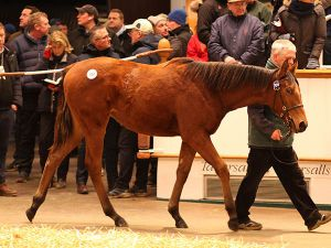 Lot 704: Kingman (GB) / Blue Angel (IRE)