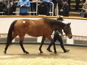 Lot 1528: Aurora Gold (GB)