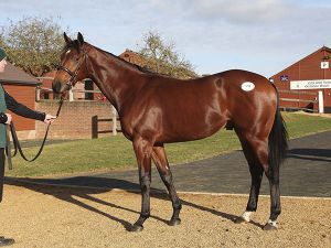 Lot 89: Oasis Dream (GB) / Azanara (IRE)