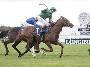 The Dam of Multiple Group 1 Winner Decorated Knight is Catalogued