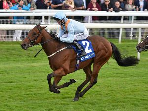 Craven Breeze Up Graduate Donjuan Triumphant
