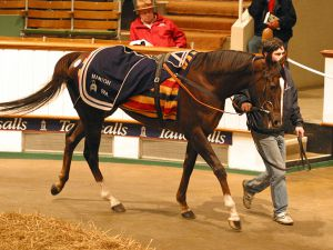 Donna Blini being sold at the 2006 Tattersalls December Sale