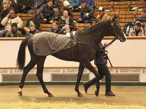 Lot 276: Archetype (FR)