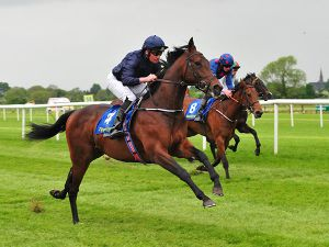 Pedestal Winning at Tipperary