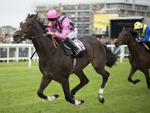 Swiss Storm winning at Newbury