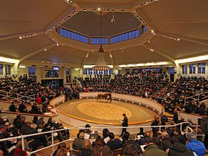 Tattersalls Sales Ring
