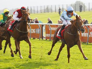 Ventura Royal winning at Redcar