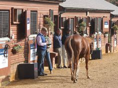 Trainer William Muir inspecting at Tattersalls