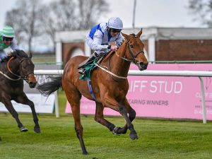 Xcelente Winning his Maiden at Thirsk and winning a £25,000 Book 1 Bonus